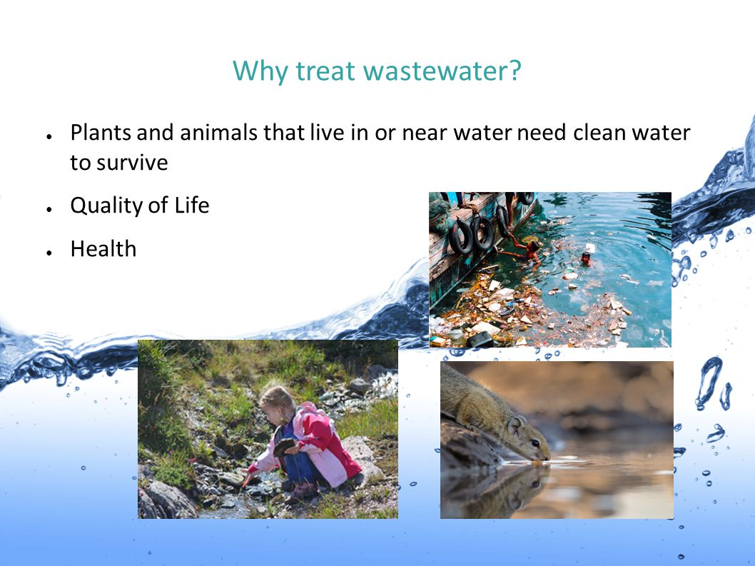 Why treat wastewater Plants and animals that live in or near water need clean water to survive. Quality of Life.