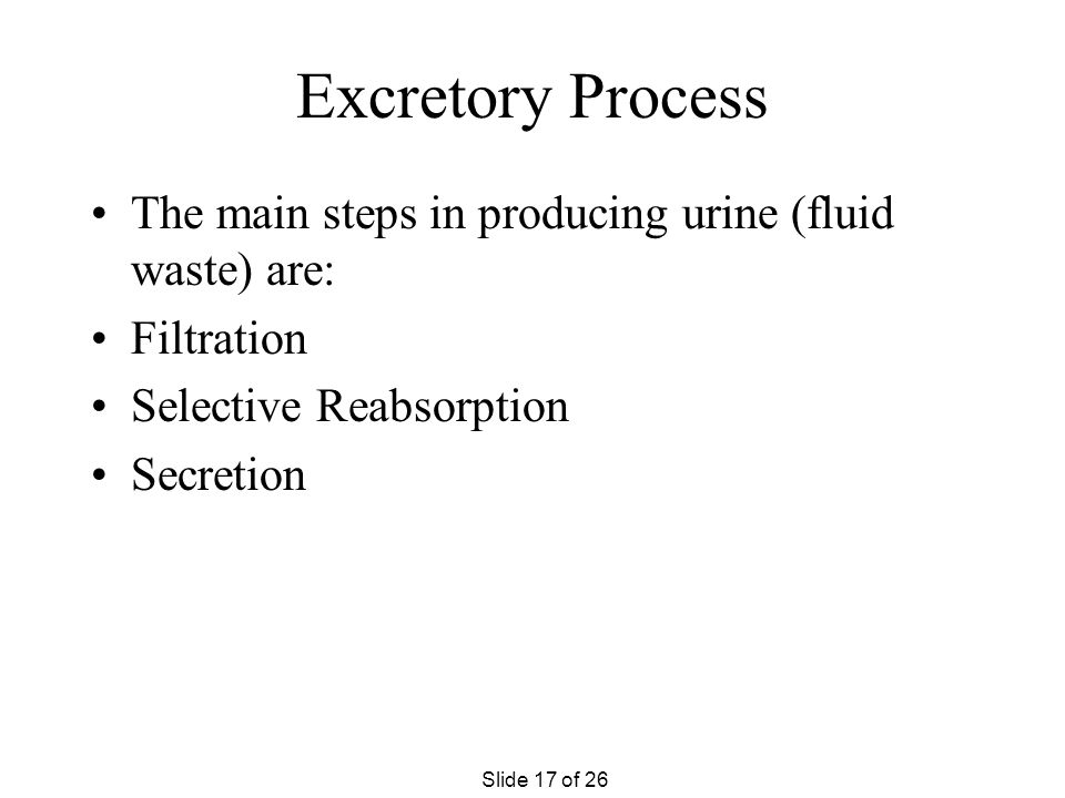 Excretory Process The main steps in producing urine (fluid waste) are: