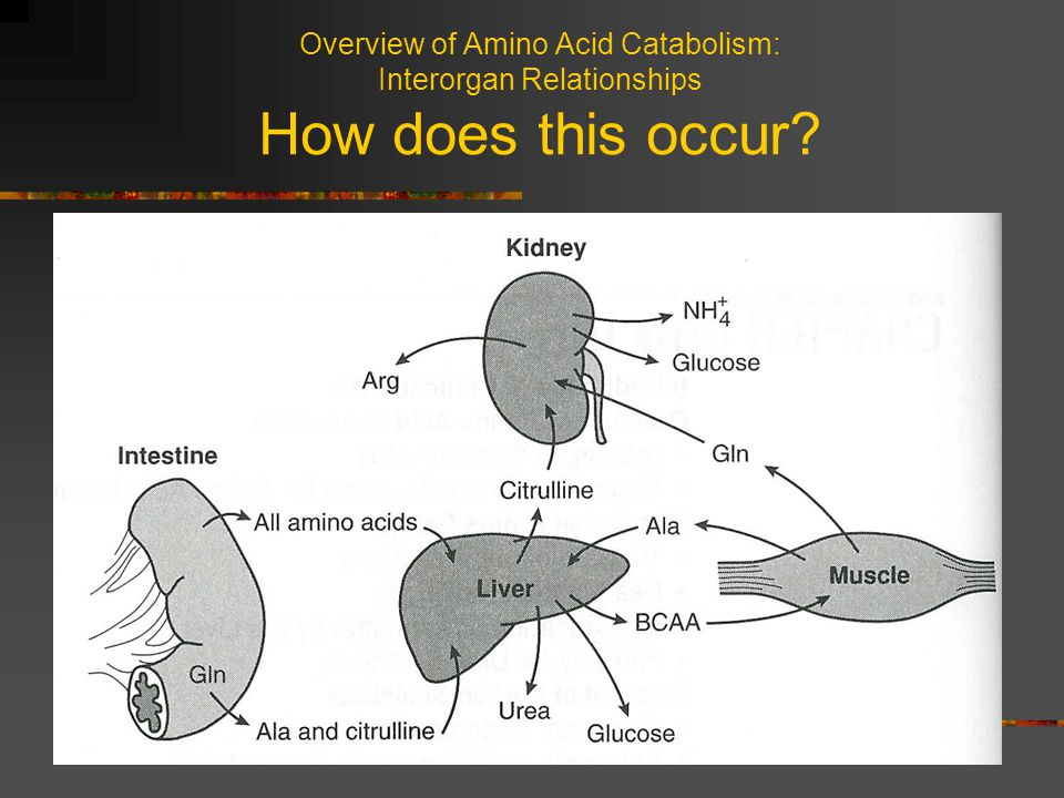 Overview of Amino Acid Catabolism: Interorgan Relationships How does this occur