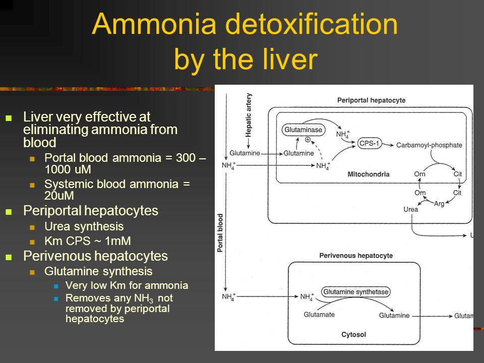 Ammonia detoxification by the liver