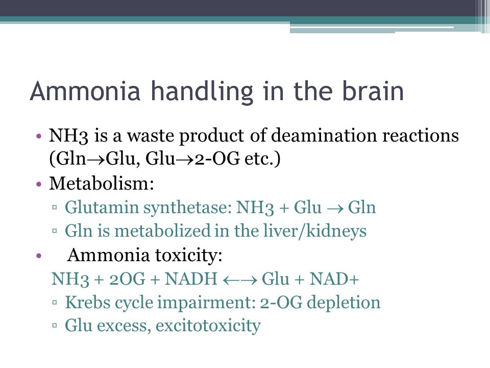 Ammonia handling in the brain