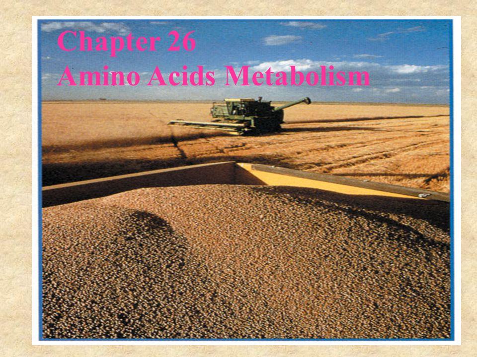 Chapter 26 Amino Acids Metabolism