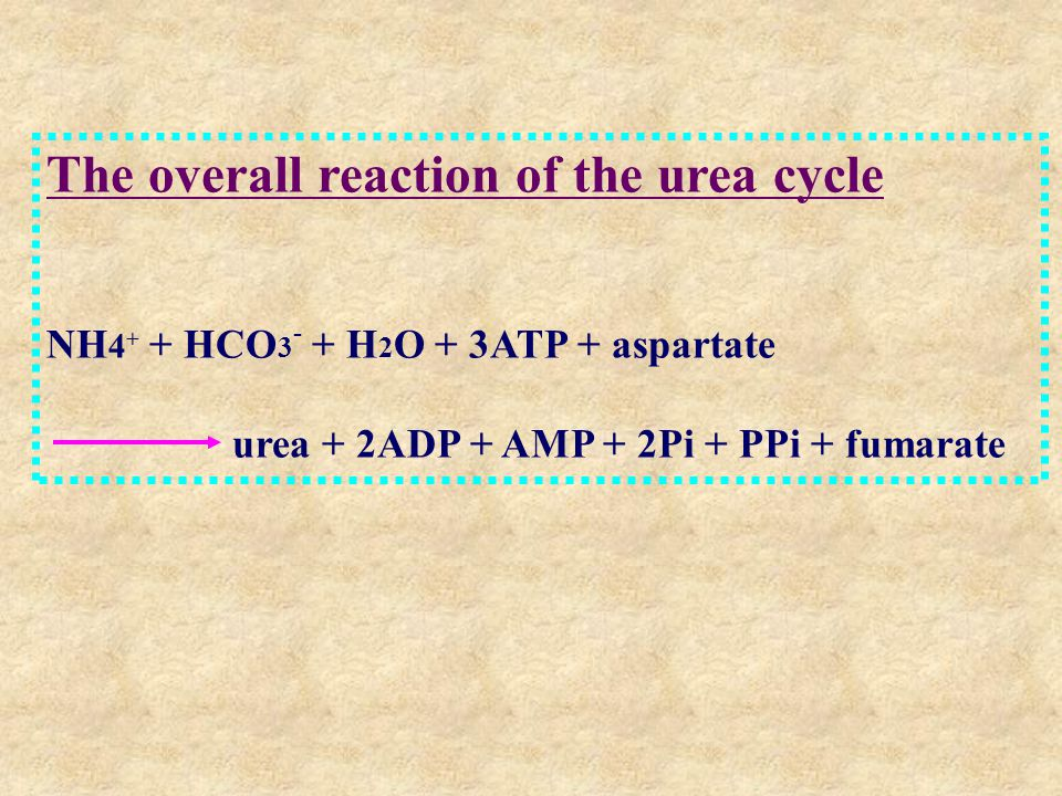 The overall reaction of the urea cycle