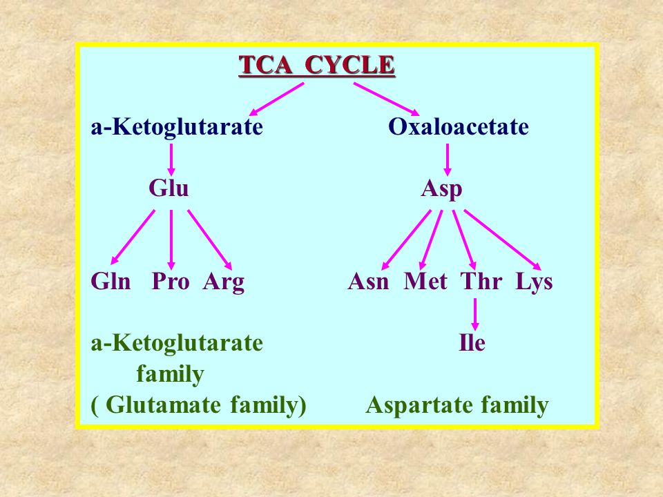 TCA CYCLE a-Ketoglutarate Oxaloacetate. Glu Asp.