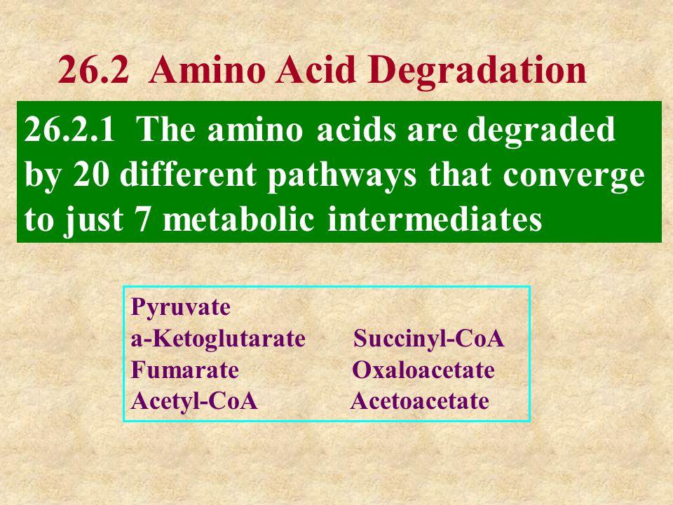 26.2 Amino Acid Degradation