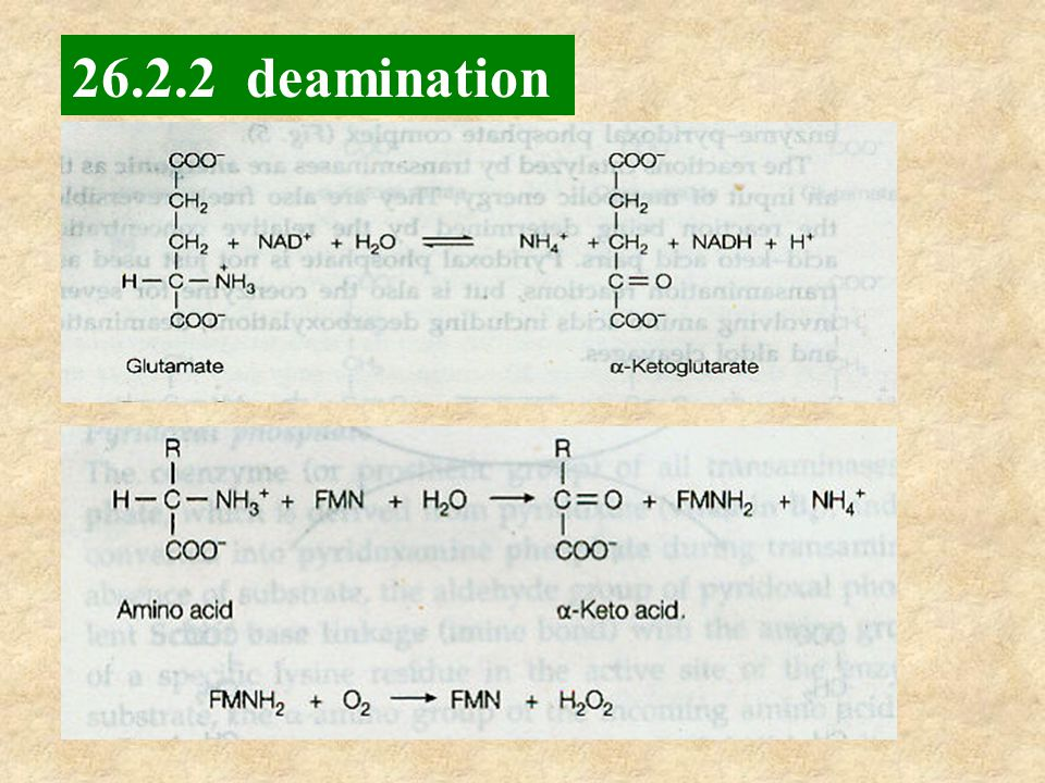 26.2.2 deamination