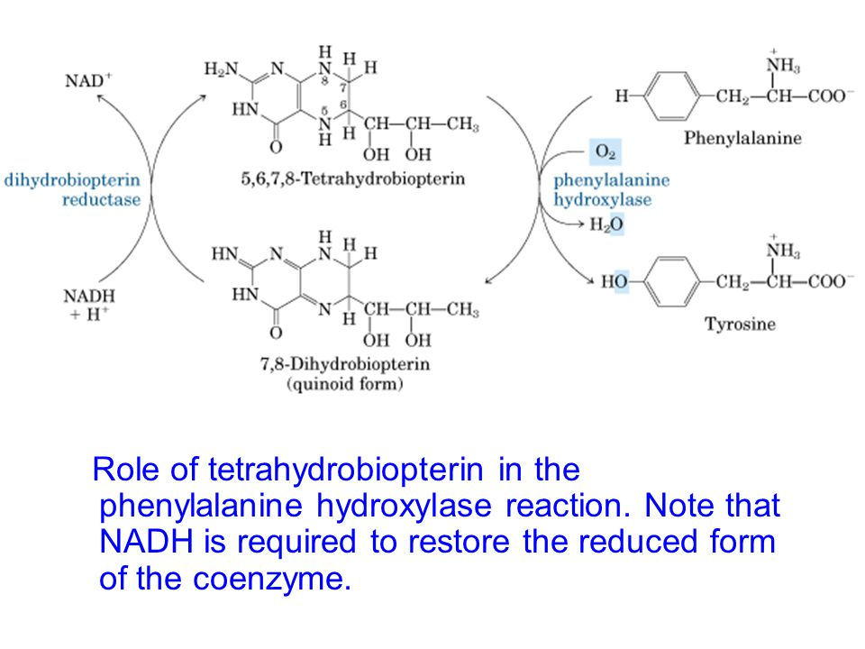 Role of tetrahydrobiopterin in the phenylalanine hydroxylase reaction