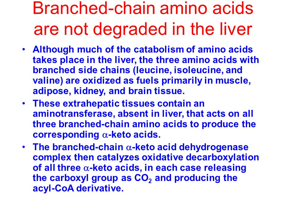 Branched-chain amino acids are not degraded in the liver