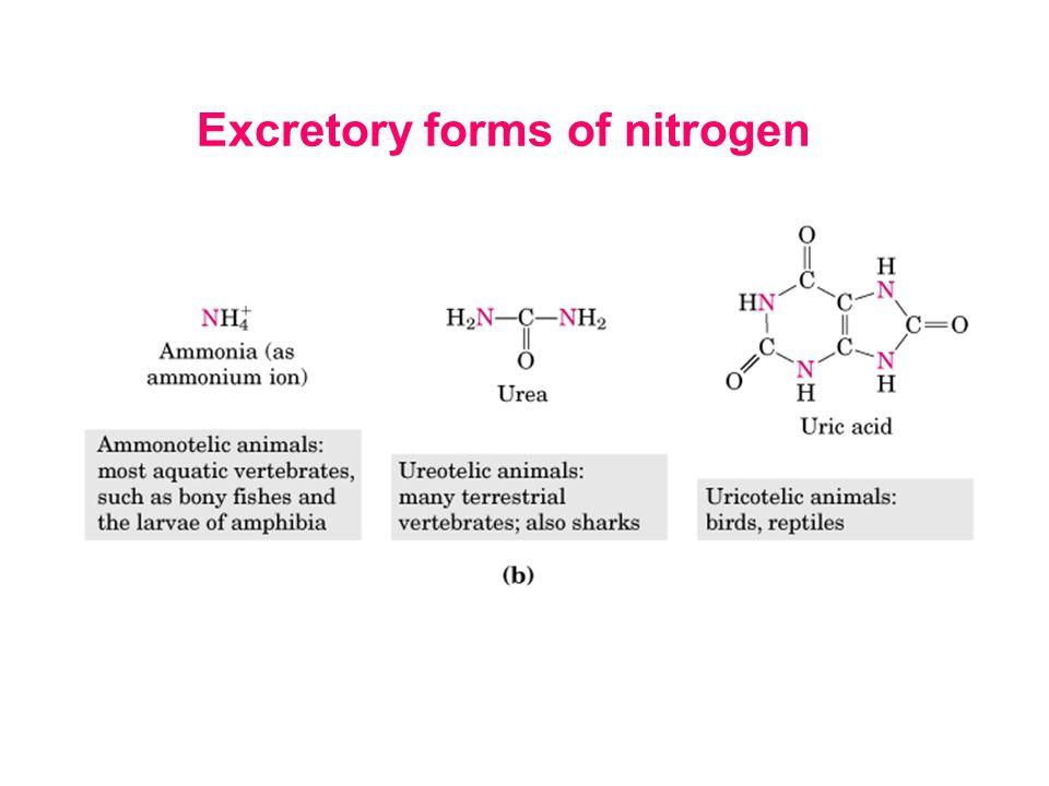 Excretory forms of nitrogen