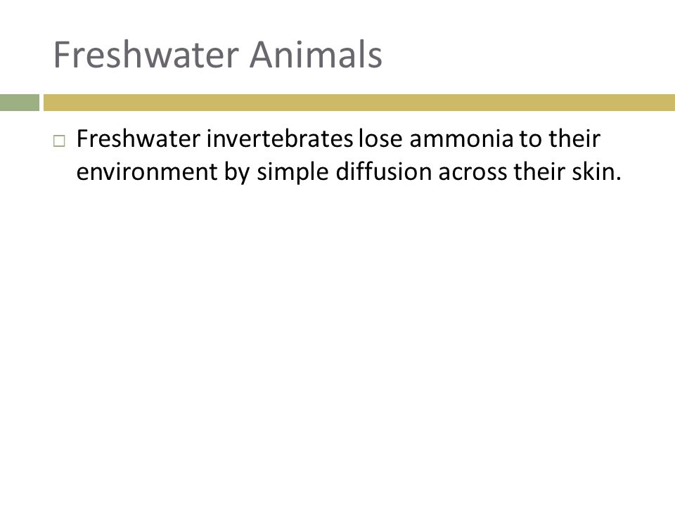 Freshwater Animals Freshwater invertebrates lose ammonia to their environment by simple diffusion across their skin.