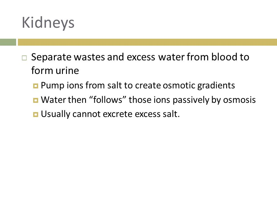 Kidneys Separate wastes and excess water from blood to form urine