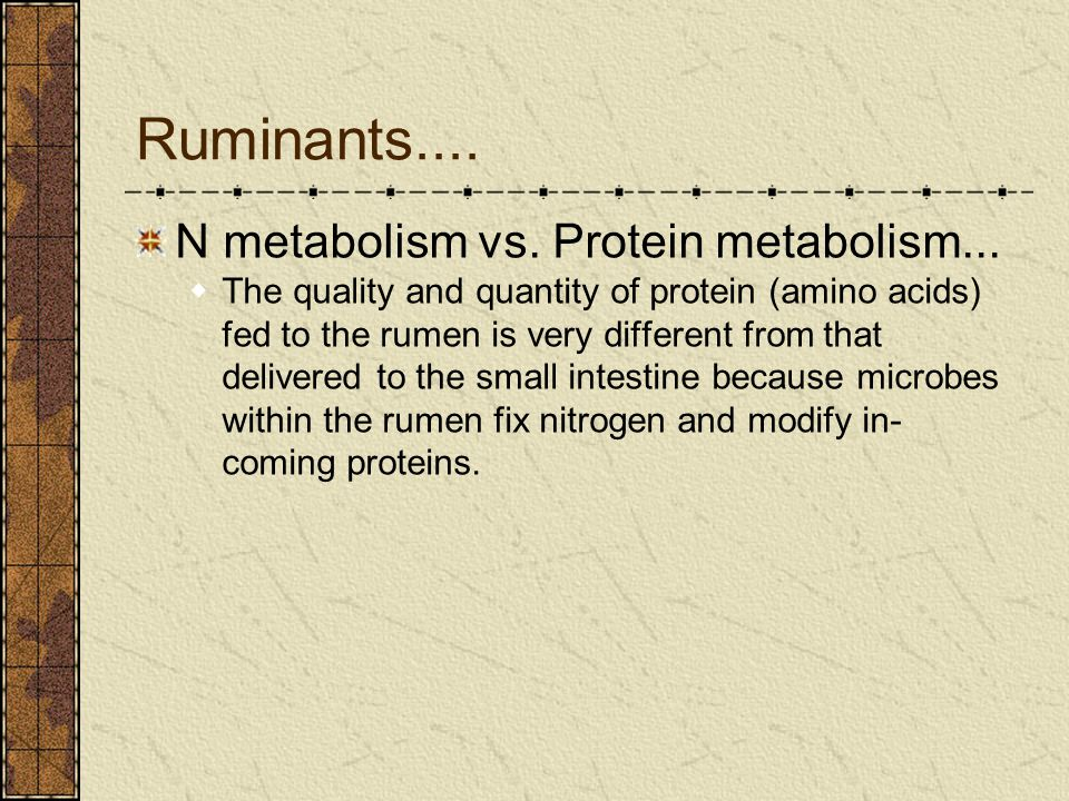 Ruminants.... N metabolism vs. Protein metabolism...