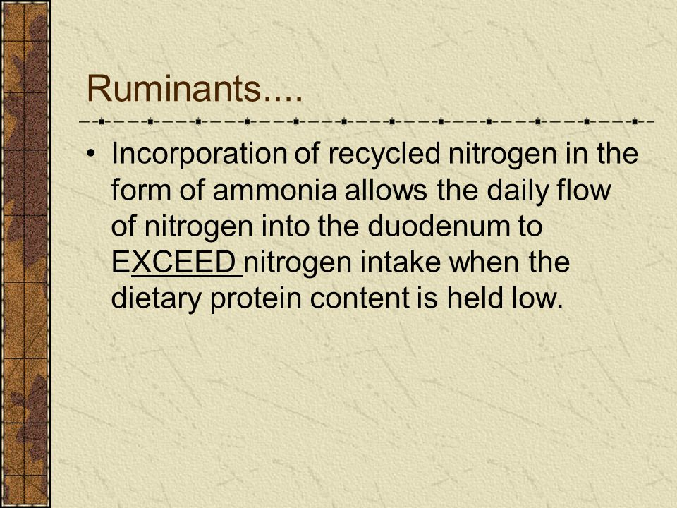 Ruminants.... Incorporation of recycled nitrogen in the