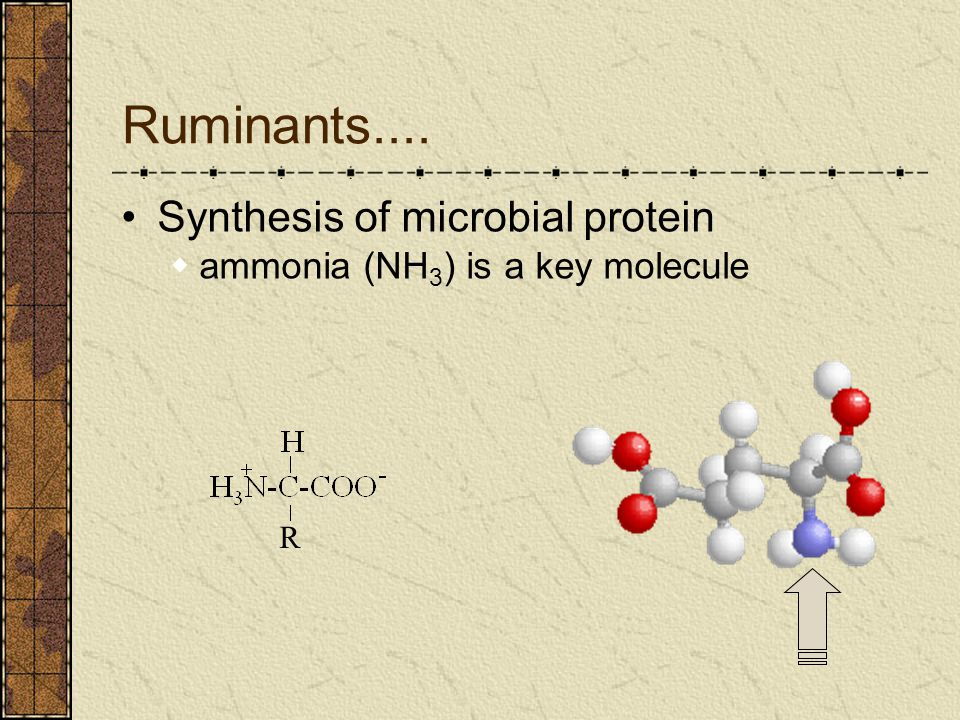 Ruminants.... Synthesis of microbial protein