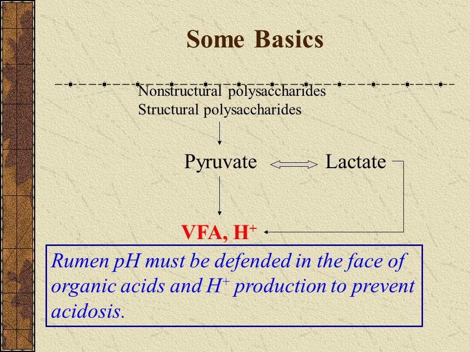 Some Basics Pyruvate Lactate VFA, H+