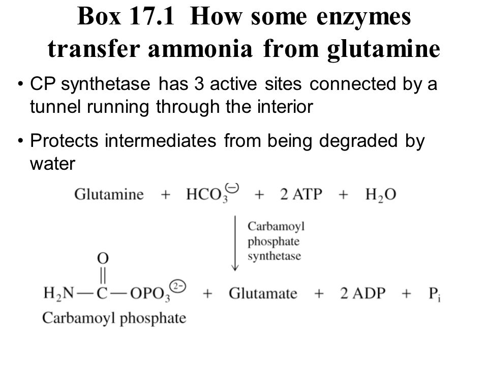 Box 17.1 How some enzymes transfer ammonia from glutamine
