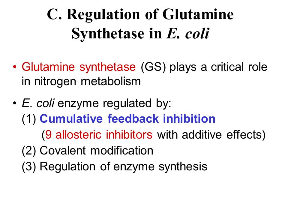 C. Regulation of Glutamine Synthetase in E. coli
