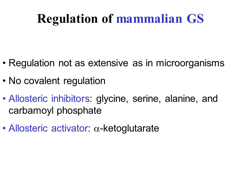 Regulation of mammalian GS