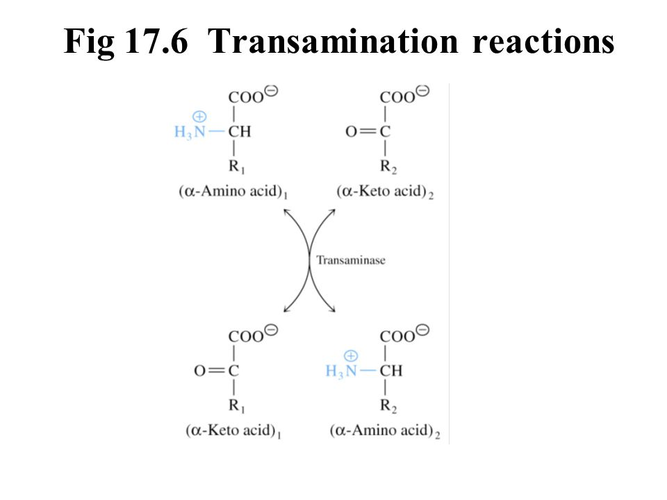 Fig 17.6 Transamination reactions