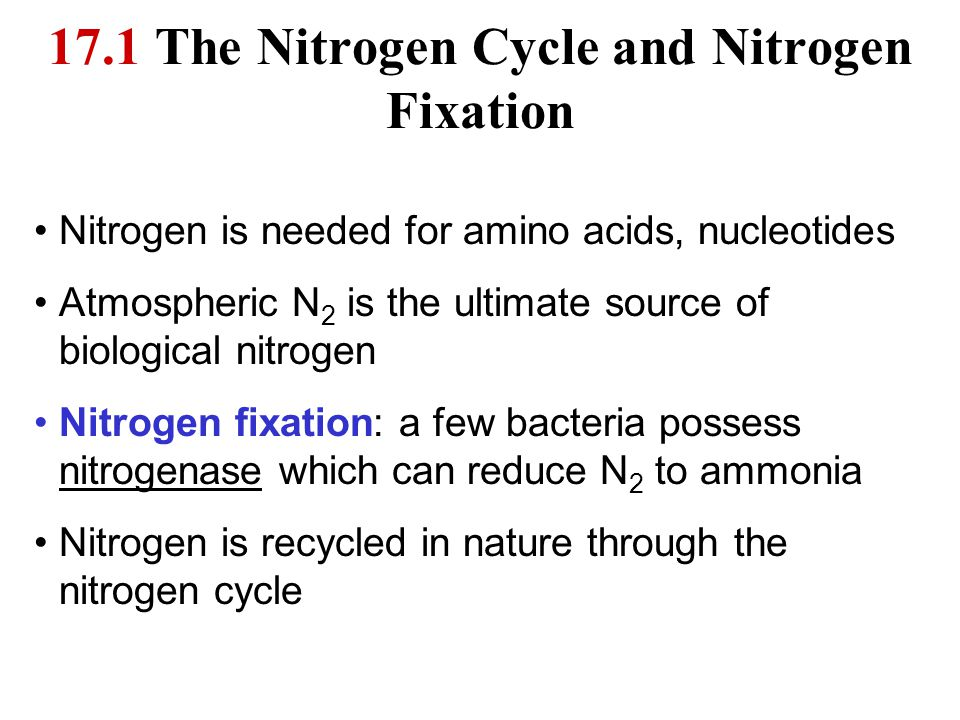 17.1 The Nitrogen Cycle and Nitrogen Fixation