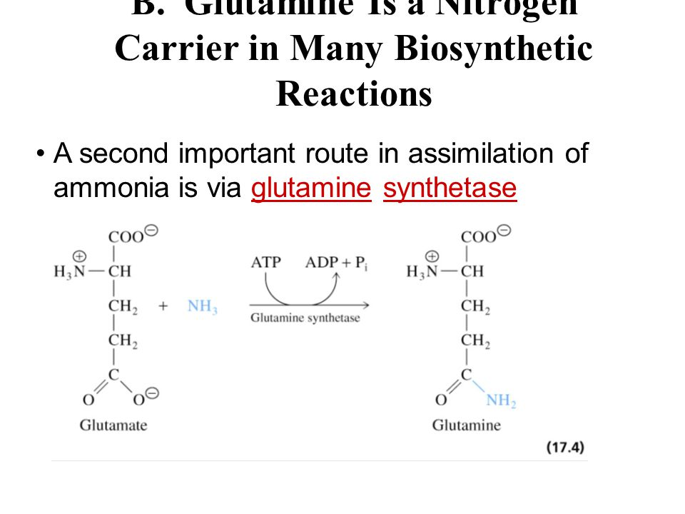 B. Glutamine Is a Nitrogen Carrier in Many Biosynthetic Reactions