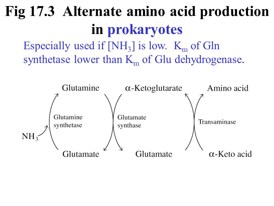 Fig 17.3 Alternate amino acid production in prokaryotes