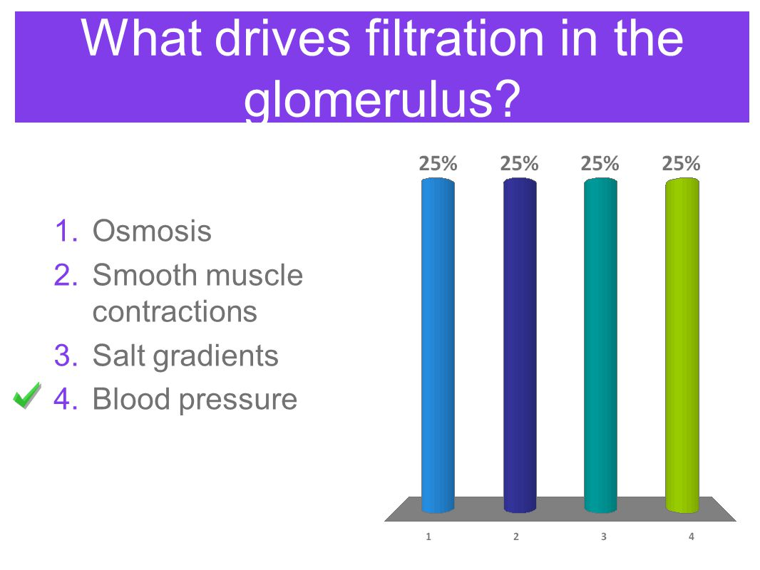 What drives filtration in the glomerulus