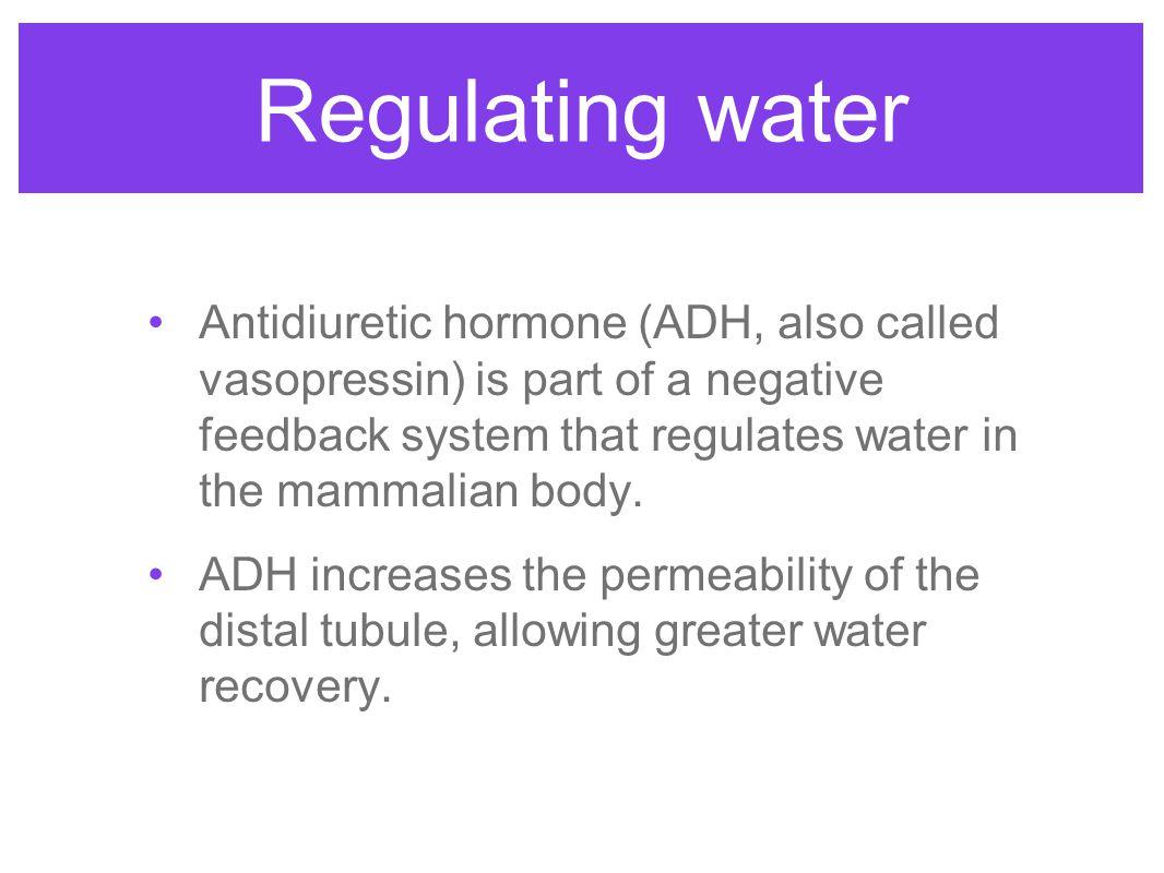 Regulating water