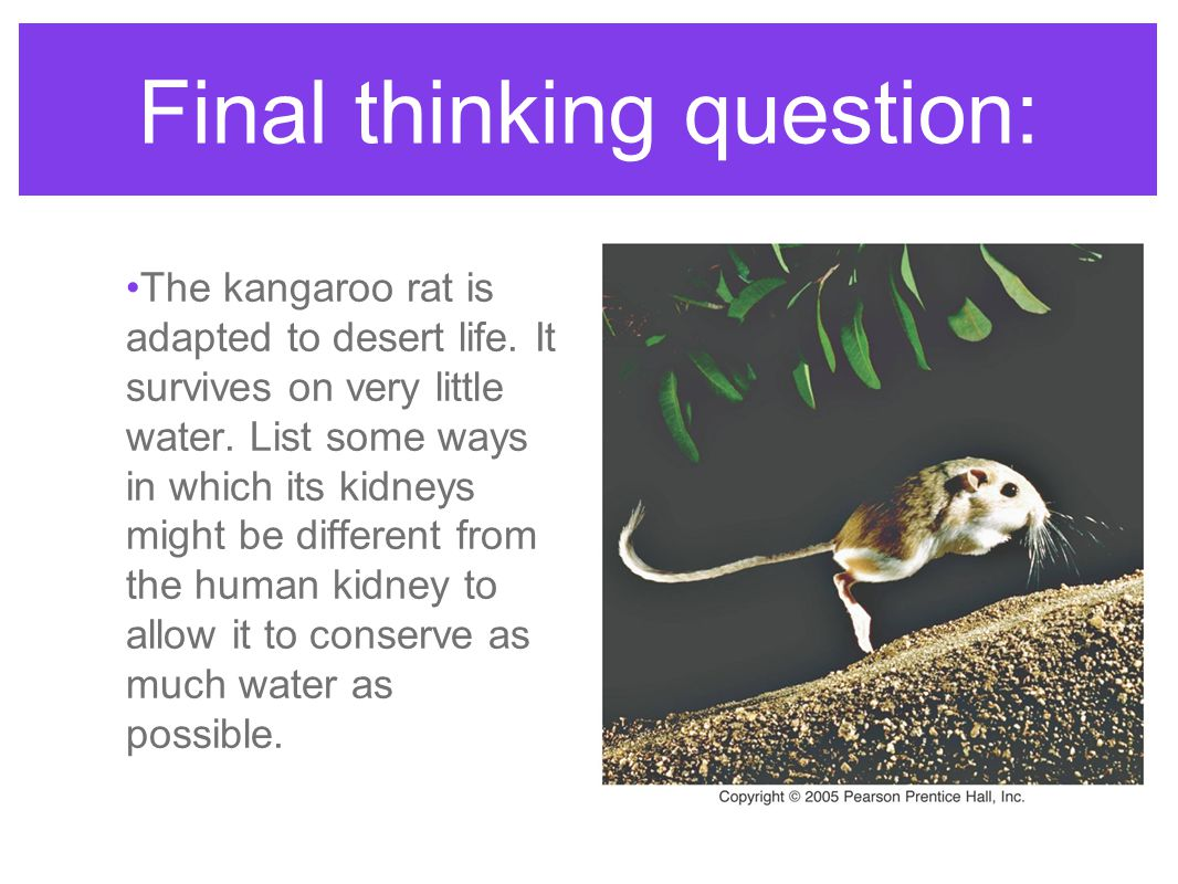 Final thinking question: