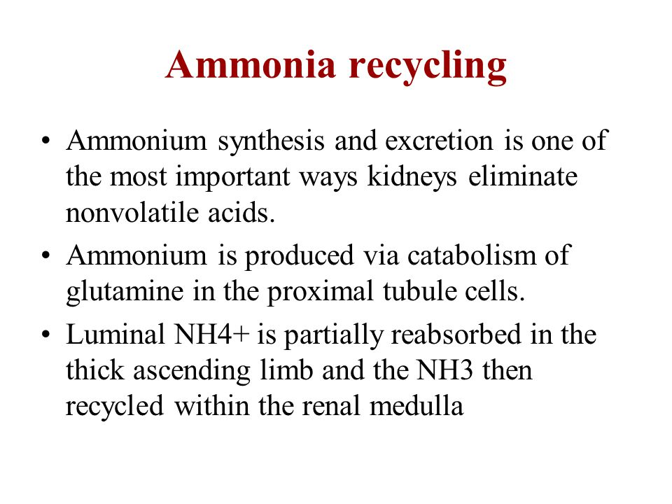 Ammonia recycling Ammonium synthesis and excretion is one of the most important ways kidneys eliminate nonvolatile acids.