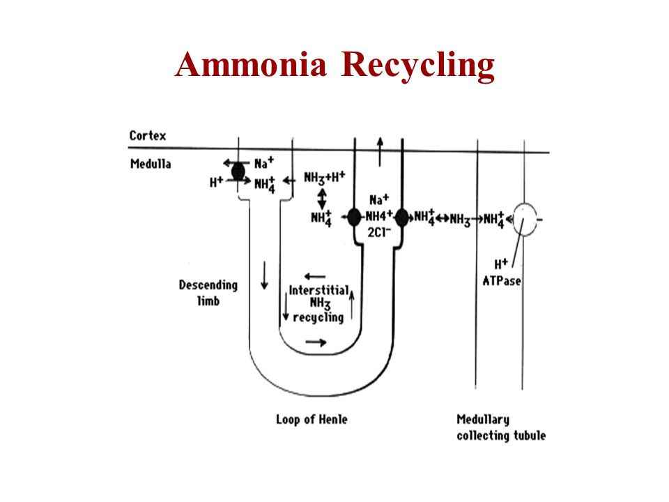 Ammonia Recycling