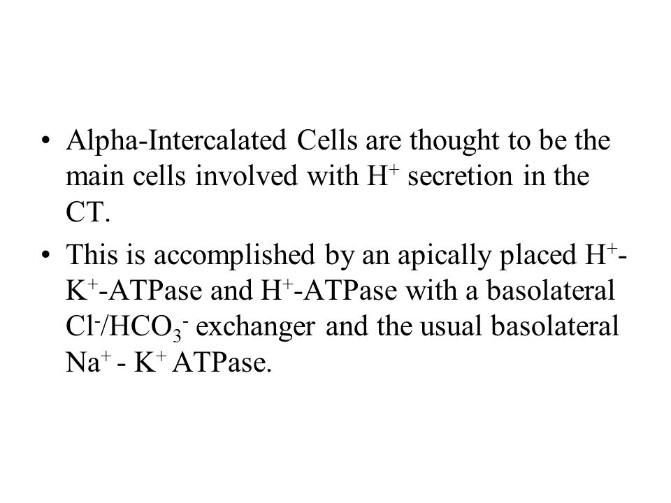 Alpha-Intercalated Cells are thought to be the main cells involved with H+ secretion in the CT.