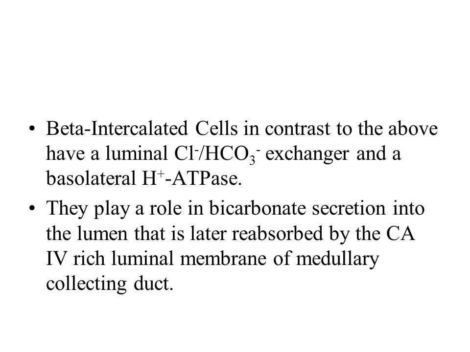 Beta-Intercalated Cells in contrast to the above have a luminal Cl-/HCO3- exchanger and a basolateral H+-ATPase.