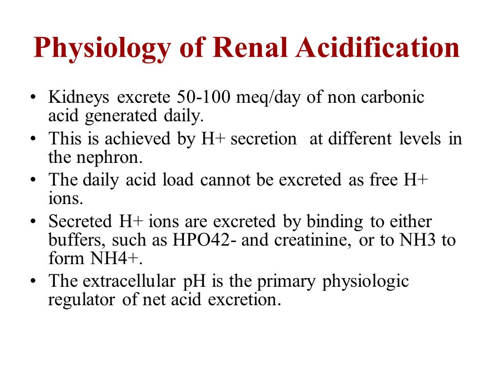 Physiology of Renal Acidification