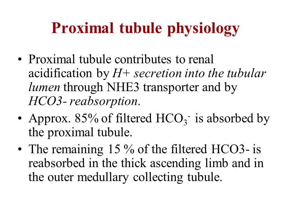 Proximal tubule physiology