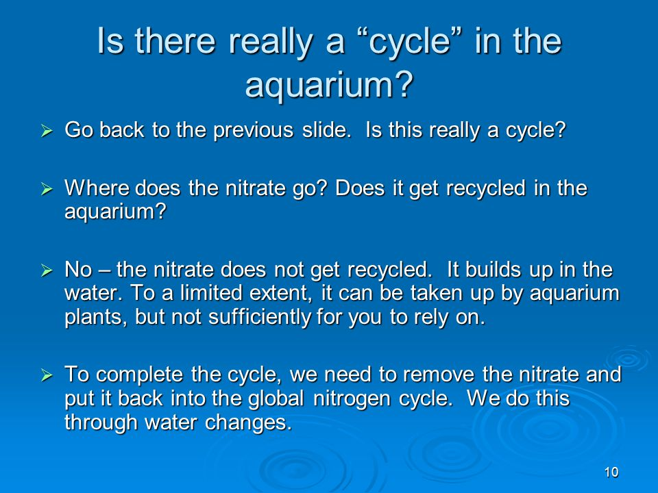 Is there really a cycle in the aquarium
