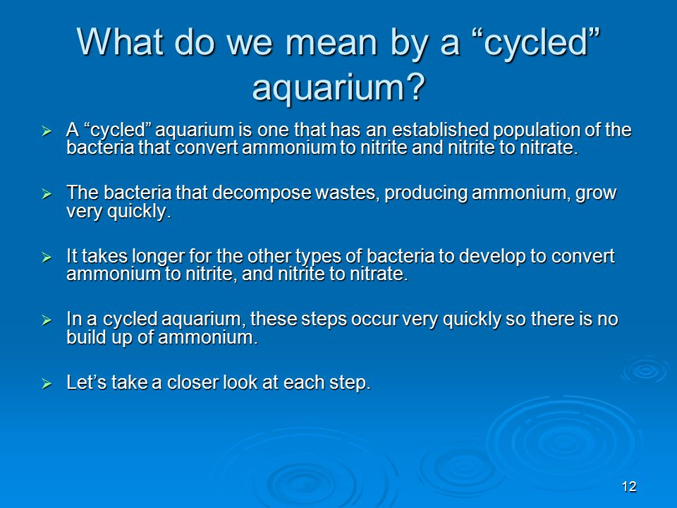 What do we mean by a cycled aquarium