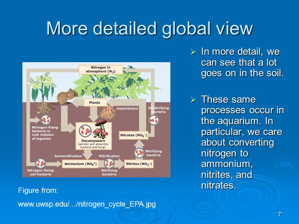 More detailed global view