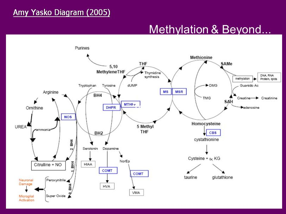 Methylation & Beyond... Text