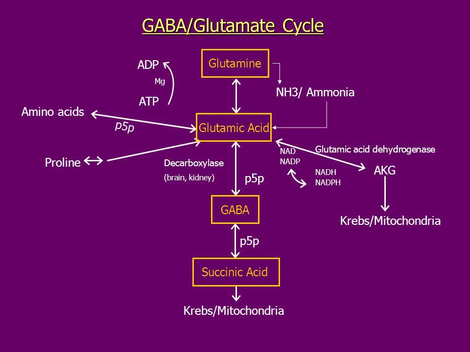 GABA/Glutamate Cycle Glutamine ADP NH3/ Ammonia ATP Amino acids p5p