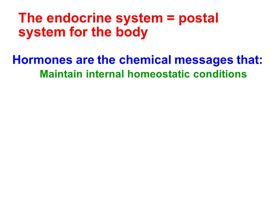 The endocrine system = postal system for the body