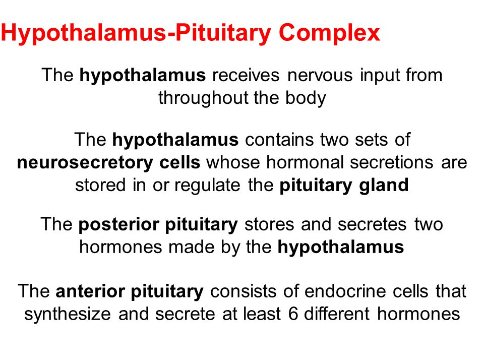Hypothalamus-Pituitary Complex
