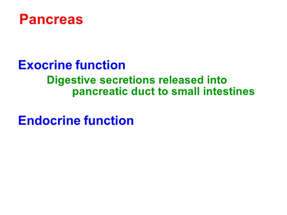 Pancreas Exocrine function Endocrine function