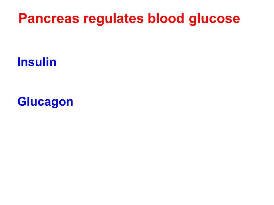 Pancreas regulates blood glucose