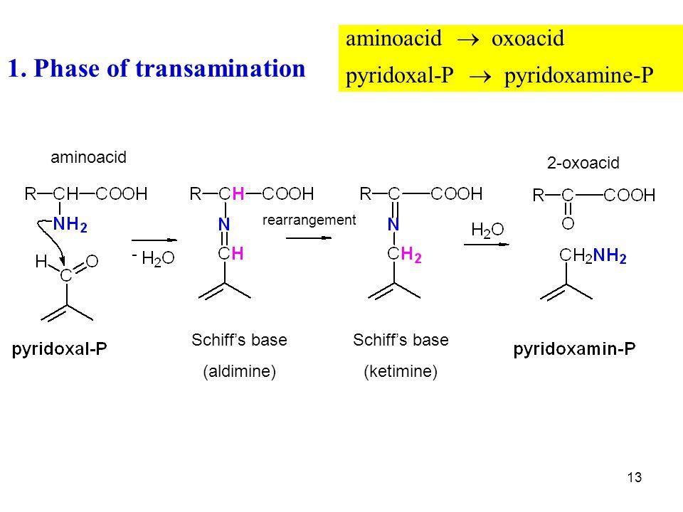 1. Phase of transamination