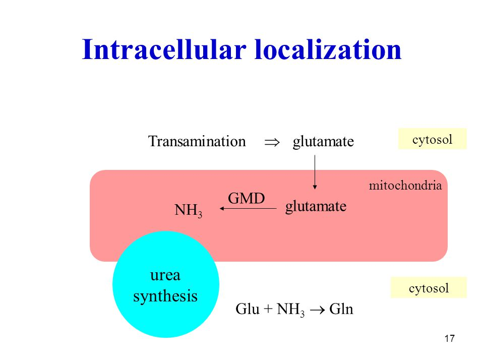 Intracellular localization