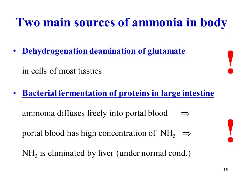Two main sources of ammonia in body