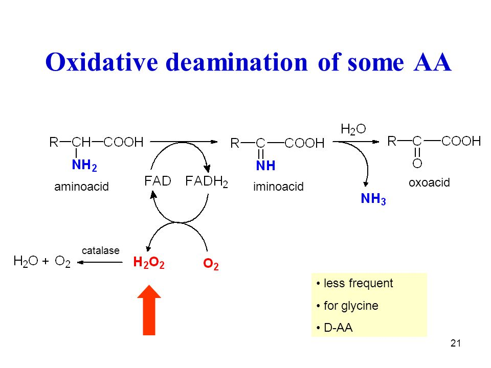 Oxidative deamination of some AA