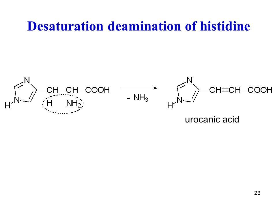 Desaturation deamination of histidine