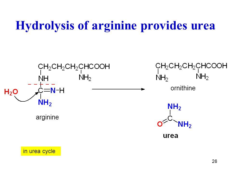Hydrolysis of arginine provides urea